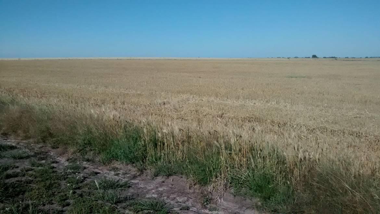 1000 has agrícolas Concordia Entre Ríos