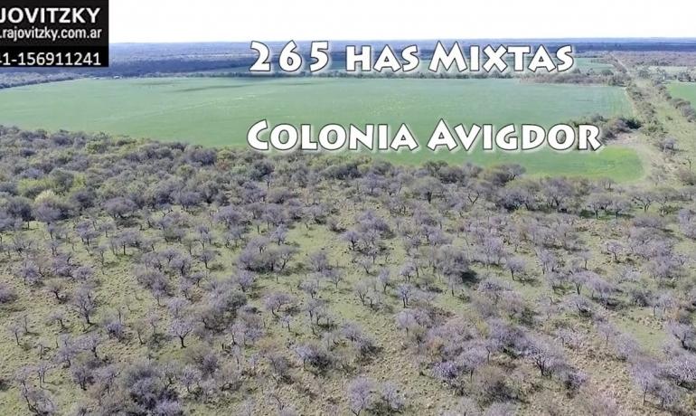 265 has Colonia Avigdor Entre Rios